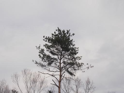 20140202・自然観察会空4