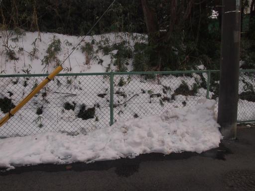 20140211・雪散歩1-01