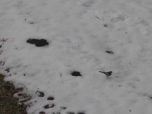20140211・雪散歩1-11