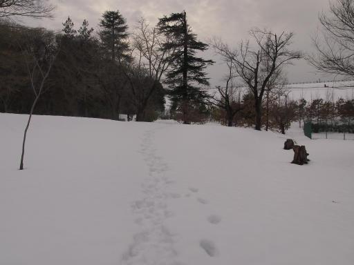 20140211・雪散歩2-15