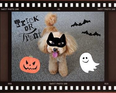 Teo 2014-10 Halloween (4)