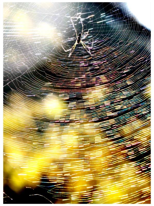 クモの巣の秋