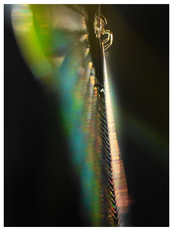 晩秋のクモの巣