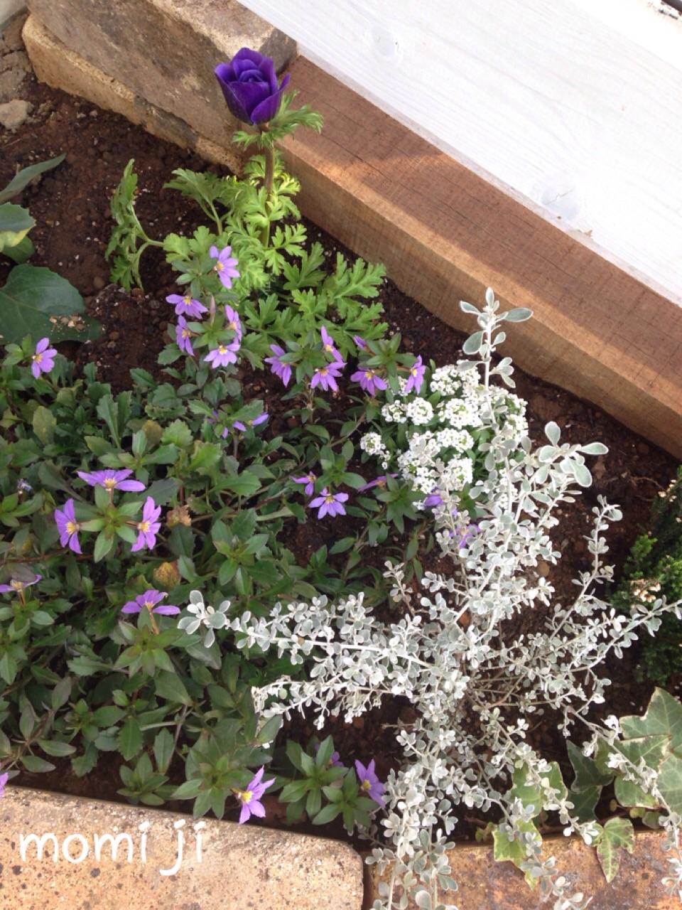 小道の花壇