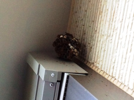 20130817ハチの巣