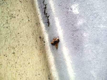 20130817ハチの巣2