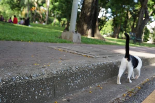 ルンピニ猫1