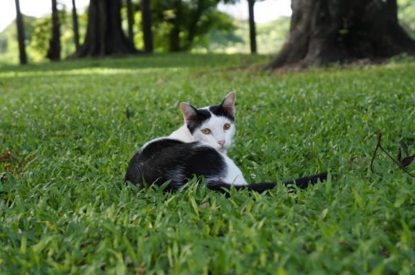 ルンピニ猫2