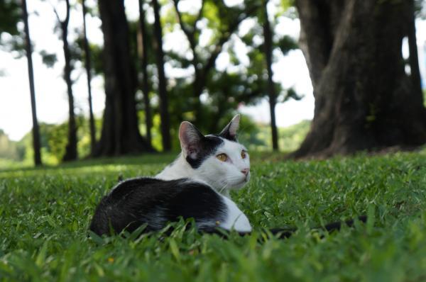 ルンピニ猫3