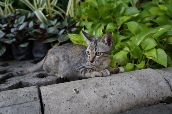 ルンピニ猫4