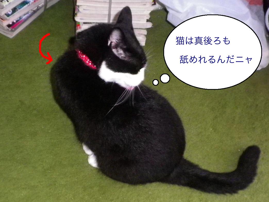 猫うしろ舐めれる 13-45-07
