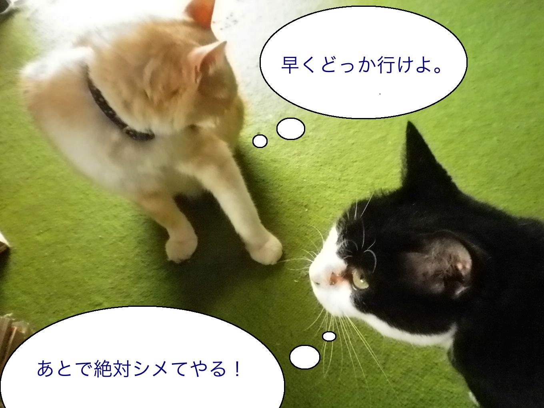 猫のライバル2