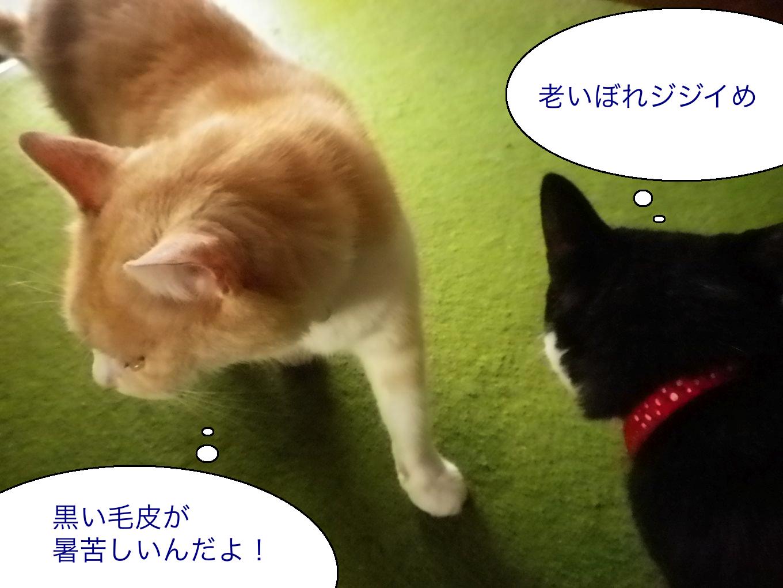 猫のライバル1