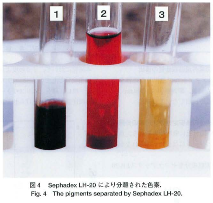 イカの色素