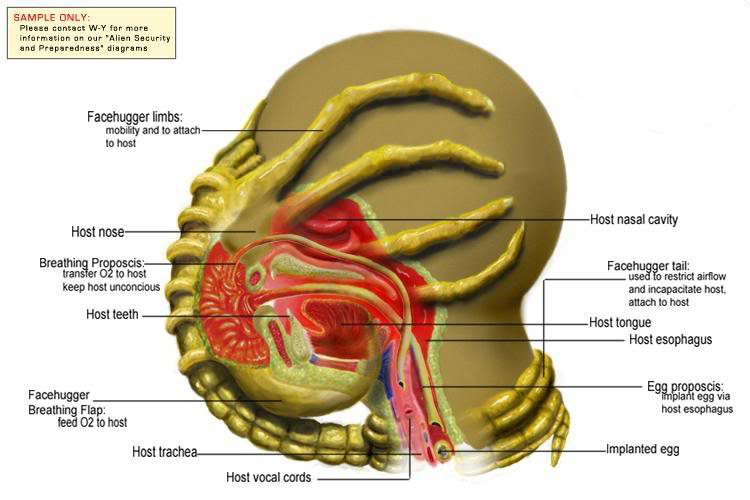 Facehugger_Diagram.jpg