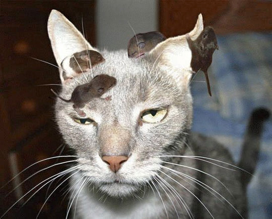 funny-cat-rats-babies-head.jpg