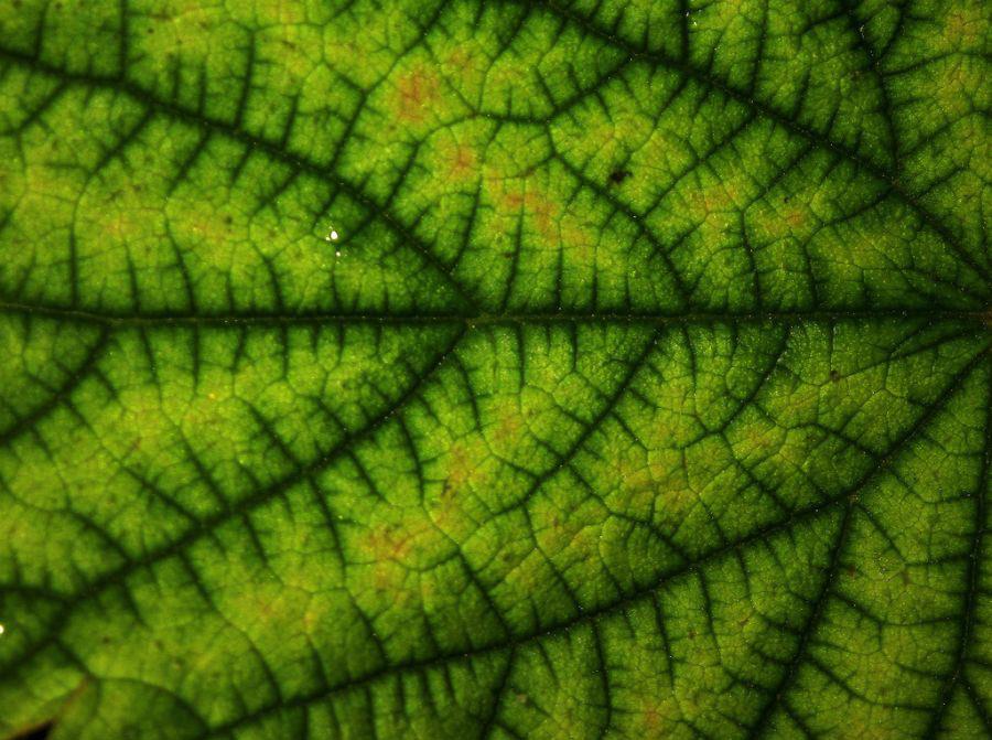 nature-fractals.jpeg