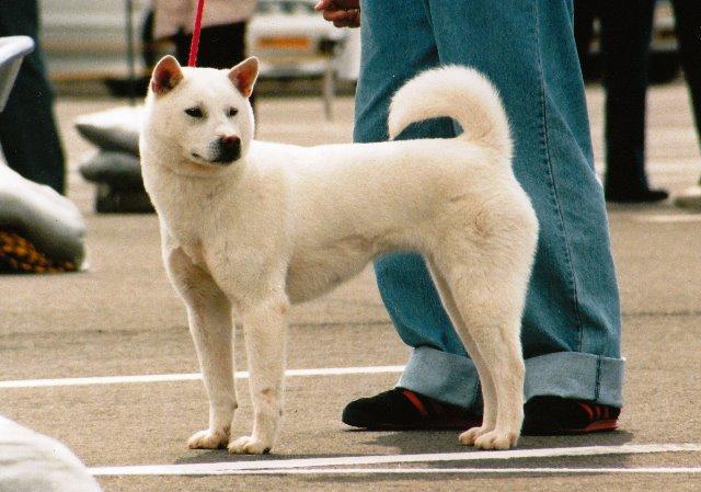 名犬10_0002