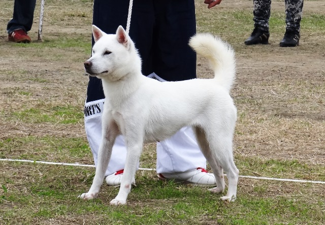 H25秋季近畿連 瑠 璃 号