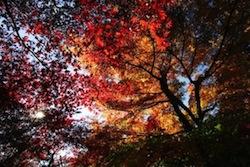11月の写真