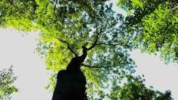 木の写真1