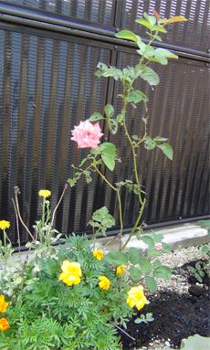 病院の花壇-1