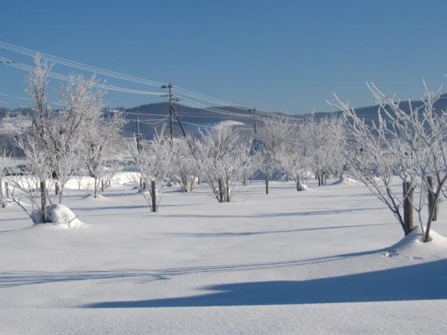 冬の朝 002