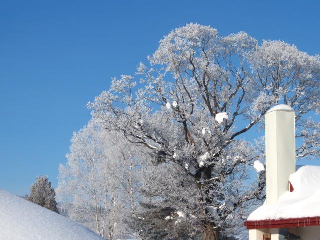 冬の朝 005