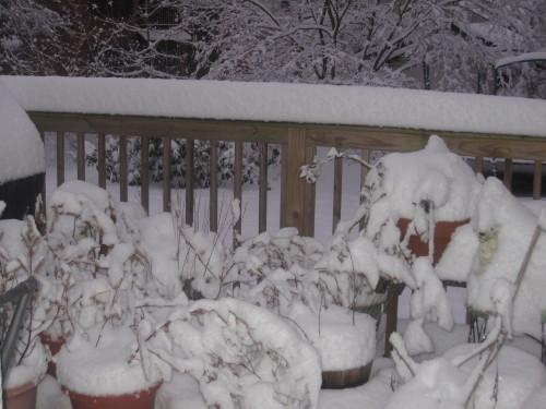 snow0203