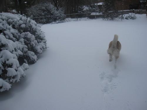 snow1032