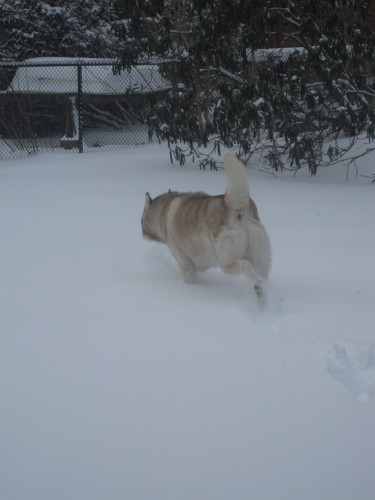 snow1034