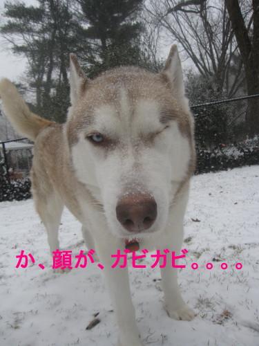 snowcchi8