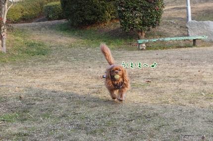 嵐丸 2014.1.22-9