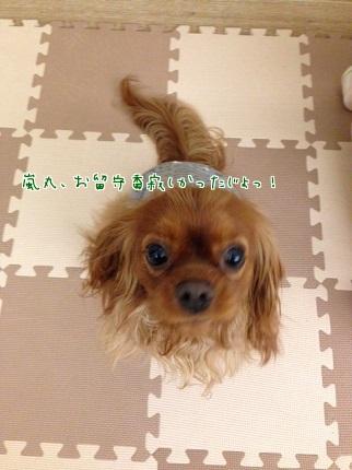 嵐丸 2014.1.28-14