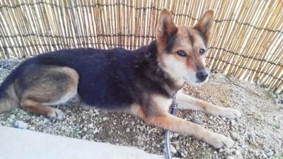 保護犬4 (225x400)