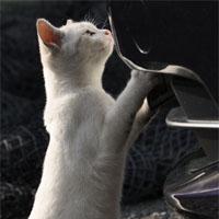 車を点検する猫