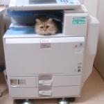 猫inコピー機
