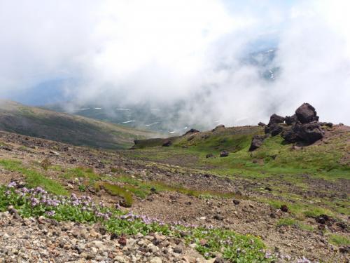 登山道脇にはタルマエソウ