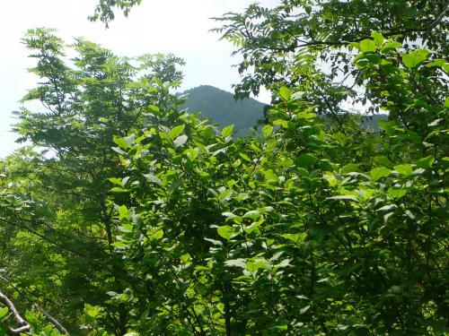 登りきったらやっと山頂が見えます…まだ遠いなぁ
