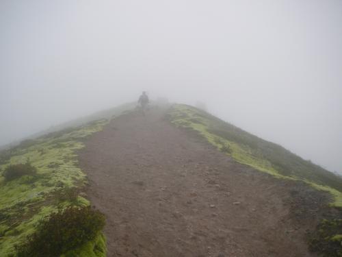登山道脇は黄緑のじゅうたん
