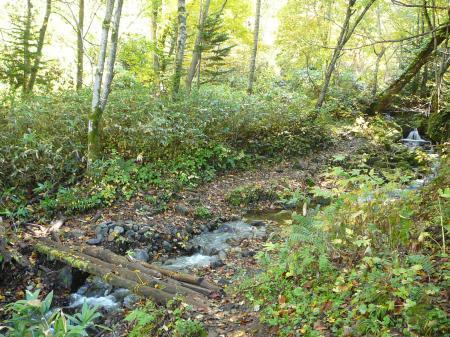 二つ目の橋は朝露と靴底の泥で滑ります…
