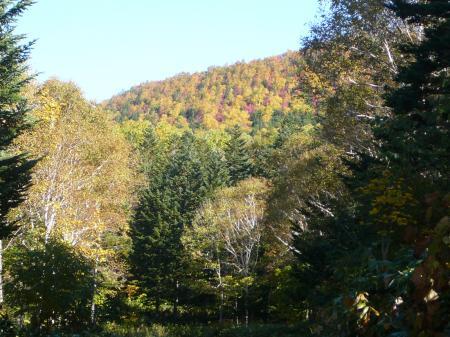 林道沿いの山々も綺麗だね~