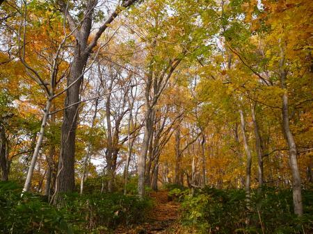 黄色の登山道