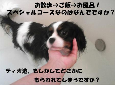 010_convert_20130401181725.jpg