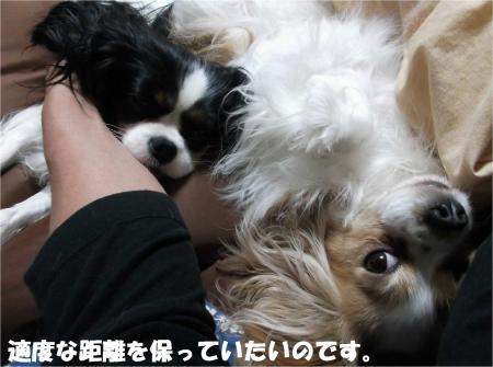 010_convert_20130412172459.jpg
