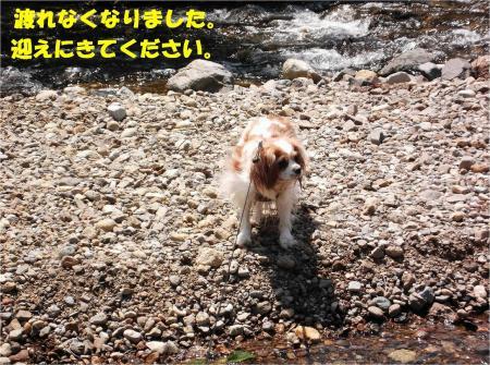010_convert_20130430112633.jpg