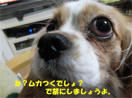 010_convert_20130607184620.jpg
