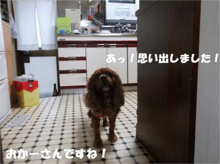 010_convert_20130626173526.jpg