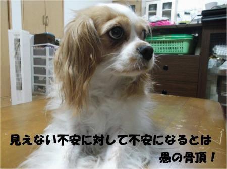 010_convert_20130822160743.jpg