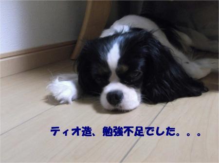 010_convert_20130903175300.jpg